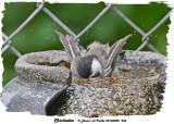 20130825 234 SERIES - Chickadee.jpg