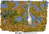 20130919 - 2 027 SERIES - Great Egret.jpg