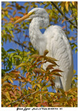 20130919 - 2 121 Great Egret.jpg