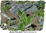 20130816 068 SERIEW - Northern Water Snake.jpg