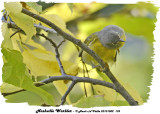 20131002 139 Nashville Warbler.jpg