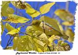 20131002 157 Bay-breasted Warbler.jpg