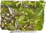 20131002 148 Bay-breasted Warbler.jpg