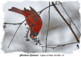 20131202 114 Northern Cardinal.jpg