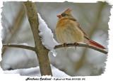 20131202 072  SERIES  - Northern Cardinal.jpg