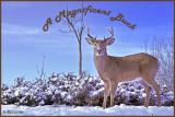 16 20101215 104 White-tailed Deer .jpg
