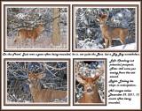 23 20111229 132 431 548 692 White-tailed Deer.jpg