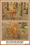 31 20120712 - 1 144 162 White-tailed Deer HP.jpg