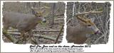 33 20131113 - 2 129, 061 SERIES - White-tailed Deer.jpg