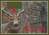 20131113 - 2 040 White-tailed Deer 2013 Xmas 1r1.jpg