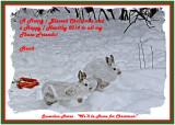 20131218 451 Snowshoe Hares2 1r1 2013 Xmas.jpg