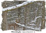 20131217 104 SERIES - White-tailed Deer.jpg