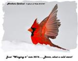 20131227 074 Northern Cardinal rawc3 1r1.jpg