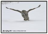 20130119 050 Great Gray Owl.jpg