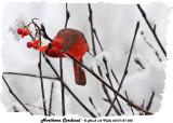 20131127 058 Northern Cardinal.jpg