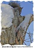 20140130 388 113 Screech Owl and Squirrel.jpg