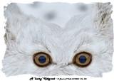 20140205 076 080 A 'hairy' Kitty-cat.jpg