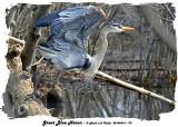 20140414 175 Great Blue Heron3 1r1.jpg