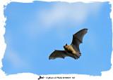 20140510 133 SERIES -  Bat.jpg