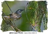 20140520 124 Yellow-rumped Warbler.jpg
