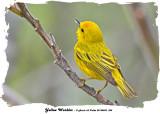 20140523 384 SERIES - Yellow Warbler.jpg