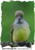 20140528 - 2 218 Great-crested Flycatcher.jpg