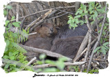 20140708 535 Beavers.jpg