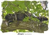 20140705 414 Porcupine.jpg
