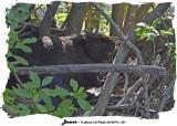 20140712 031 Beaver.jpg