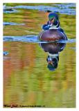 20140926 181 Wood Duck.jpg