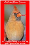 20100202 535 Northern Cardinal (F).jpg