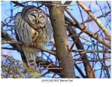 20161228 0537 Barred Owl.jpg