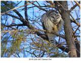 20161228 0457 Barred Owl.jpg