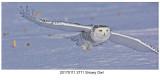 20170111 2711 Snowy Owl r1.jpg