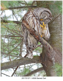 20170127-1 4058 SERIES - Barred Owl.jpg