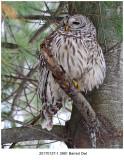 20170127-1 3991 SERIES - Barred Owl.jpg