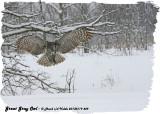 20130119 449 Great Gray Owl.jpg