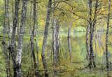 Scottish Mangrove