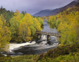 Golden Gown Affric