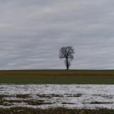 Gäu 06.01.14