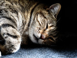 20160206_012036 Dragan Cat (Sat 06 Feb)