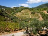 20160907_020504 Cinque Terre In Three Easy Pieces. 2 - The Farmland (Wed 07 Sep (2))