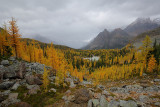 2014 Lake O'Hara - Fall Colours in Overcast