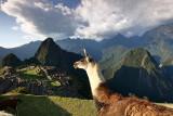 Machu Picchu_G1A6906.jpg