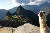 Machu Picchu Classic view with Lamas