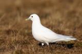 BirdingBreaks Spitsbergen 2013