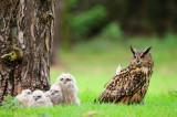 Oehoe / Eagle Owl