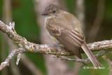 Flycatchers & Vireos