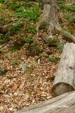 Lauriault Trail (Gatineau Park)