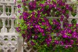 Ornamental Gardens